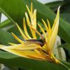 Les fleurs de la Réunion