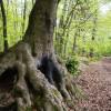{Paris} Balade en forêt à Ville d'Avray