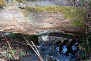 La Photo du Mois thème promenons nous dans les bois