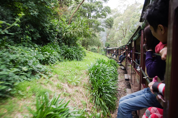 Puffing Billy Belgrave Gembrook
