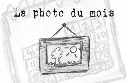 La Photo du Mois
