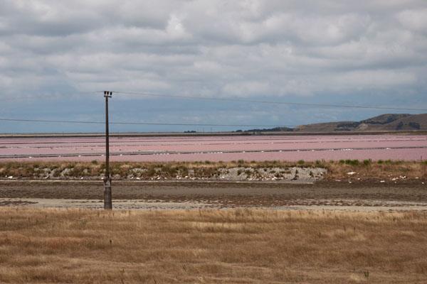 marées salants rose de nouvelle zélande