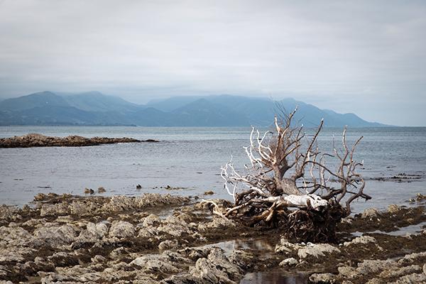 Spot pour les colonies de phoques