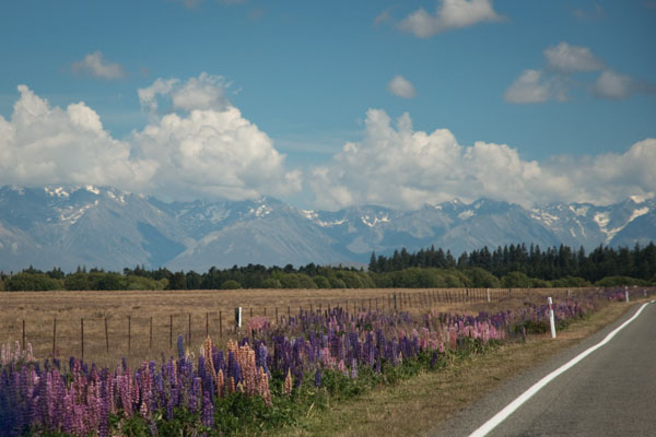 Sur la route entre Timaru et Lake Tekapo