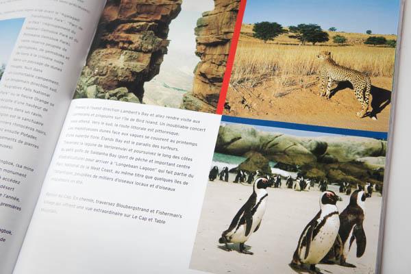 Voir des pingouins en Afrique du Sud