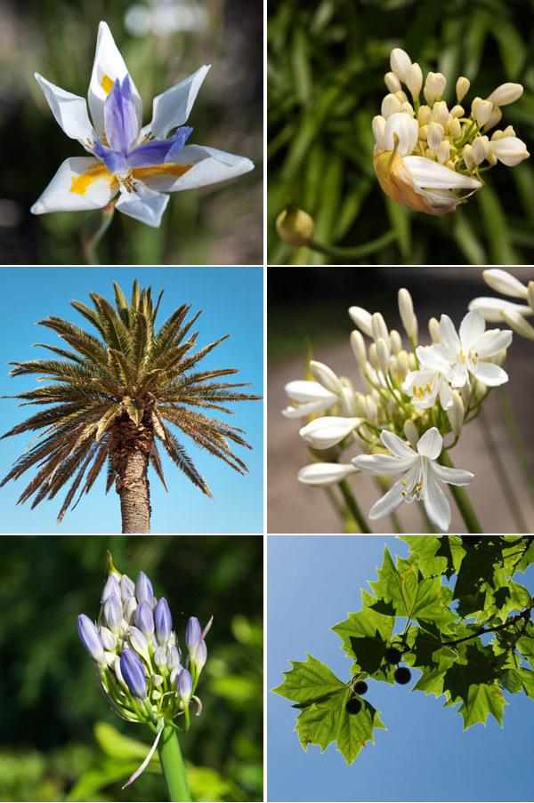 les fleurs de l'australie
