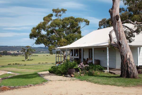 Vignes Milton en Tasmanie