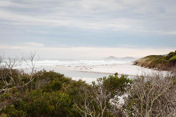 Denison Beach conservation area Tasmanie