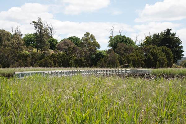 tamar island wetlands reserve tasmanie