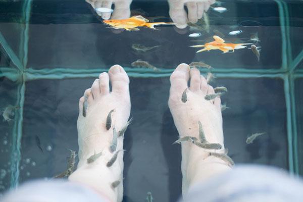 Aqua zen Fish à Biscarosse