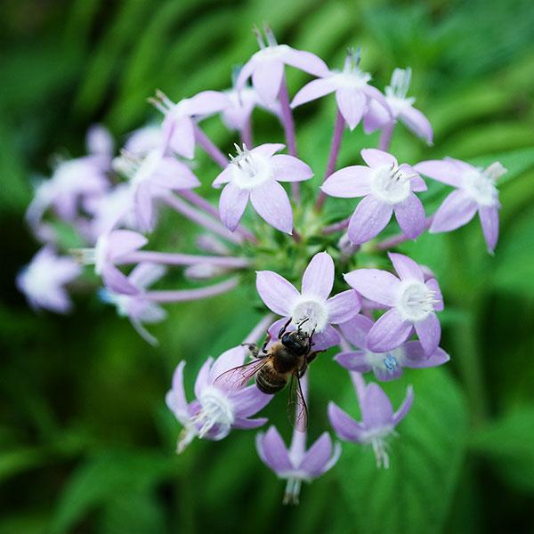 Fleur avec abeille