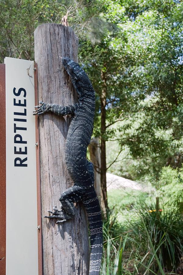 reptiles australie