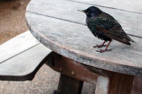 Les oiseaux de Hyde Park Londres