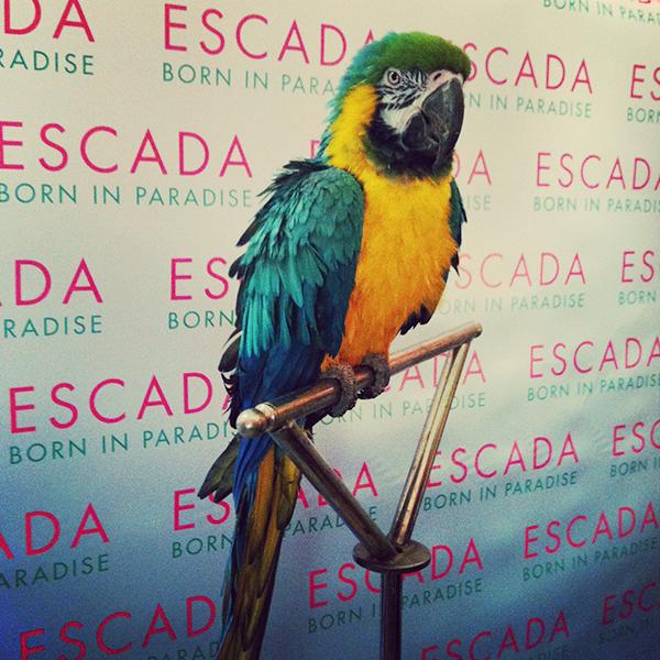 Présentation Presse ESCADA