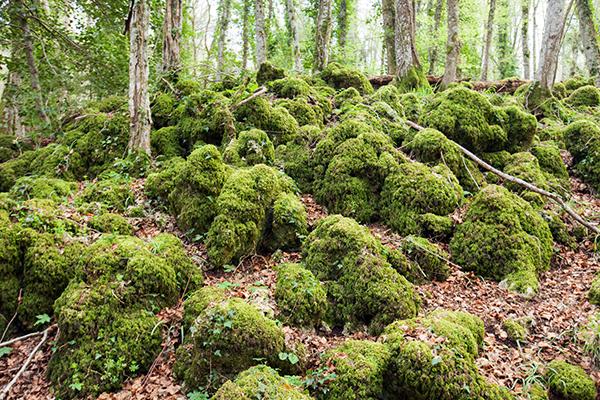 Gargano - Foresta Umbra