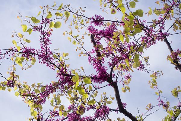 Flore du Gargano dans les Pouilles