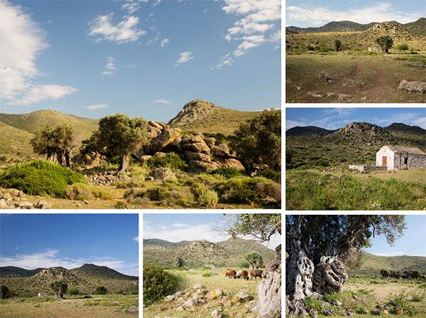 Parc naturel et oliviers centenaires à Egine