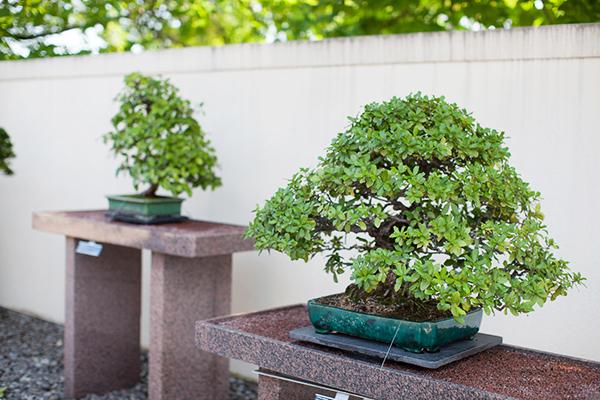 Le Jardin japonais Montréal